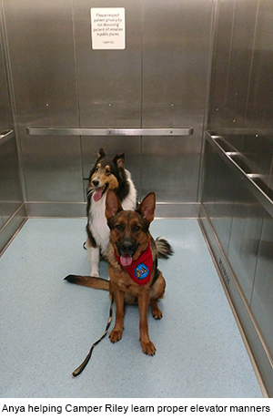 Dog training school camp, trained in-house Massachusetts New England
